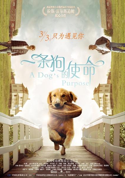 2017最新电影《一条狗的使命》喜剧剧情TS国语中字