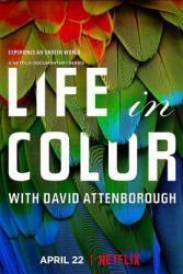 2021英国9.1分纪录片《生命之色/大卫·艾登堡:自然本色》全3集