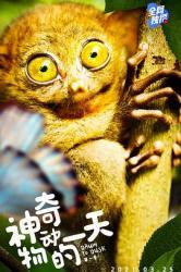 2021加拿大纪录片《神奇动物的一天 第一季》全8集